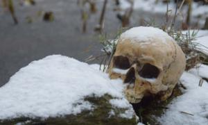 Skull in the snow. Credit: Antje / Adobe Stock