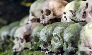 Cleaned skulls stacked under a tree in the cemetery as per tradition on Skull Island, Trunyan, Bali. Source: dani3315 / Adobe Stock.
