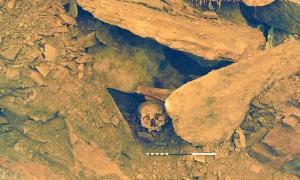 Skull shown in-situ prior to excavation