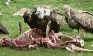 Sky Burial: Tibet's Ancient Tradition for Honoring the Dead