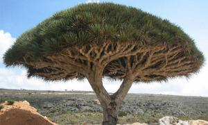 The 'lost world' of Socotra