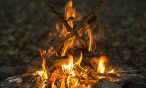 Charred food remains from hearths were discovered, left by ancient humans eating starch. Source: PetarPaunchev / Adobe.