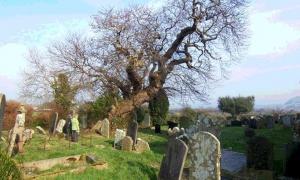 The Armada Tree.