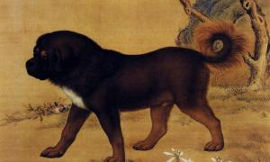Artwork depicting a Tibetan Mastiff from the Qing Dynasty.