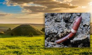 Deriv; Silbury Hill, Avebury, UK. Inset, the humble earthworm