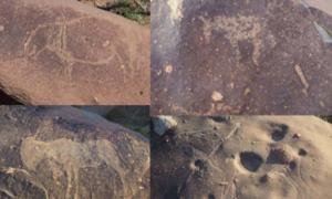 Carvings of hippopotamus, horses, and antelopes in the Vredefort impact crater.        Source: Dr. Matthew Huber / University of the Free State