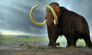 Several types of mammoths walked the earth during the Pleistocene epoch.