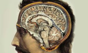Human Brain by J.M. Bourgery, 1831-1854.