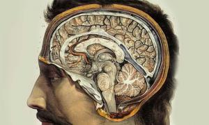Human Brain by J.M. Bourgery, 1831-1854.