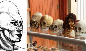 Selection of Paracas Elongated Skulls