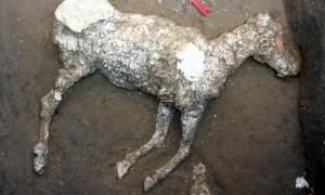 The remains of an ancient Roman horse have been found in Pompeii