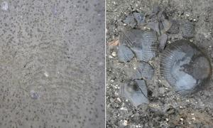 The 5,500-year-old fingerprint (left) and the funnel beaker (right)
