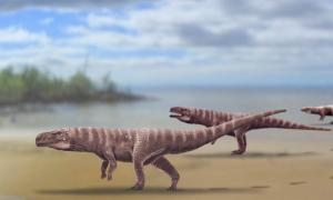 Reconstruction of Batrachopus trackmaker from the Lower Cretaceous Jinju Formation of South Korea, a bipedal ancient crocodile. Source: Anthony Romilio, The University of Queensland / Nature