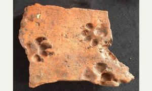 Ancient dog prints and Iron Age mint in England