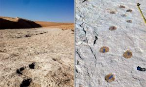 Human and animal footprints found in Tabuk, northern Saudi Arabia. Source: Heritage Commission Press Release