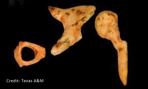 Ancient Fossil - Human Origins