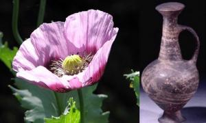 Left, opiate poppy and right Vessel in which traces of opiate have been found.