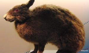 Ancient Rabbits