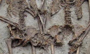 Two ancient skeletons found holding hands in medieval chapel