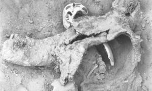 One of the skeletons believed to have died during an ancient poison gas attack