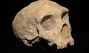 Ancient human skull of Neanderthal