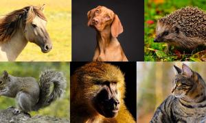 Some of the animal species that held a special place in ancient folklore: Horse (Pixabay License), dog (Pixabay License), hedgehog (Pixabay License), squirrel (Pixabay License), baboon (Pixabay License), cat (Pixabay License).