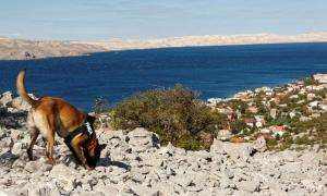 The archaeology dogs proved extremely accurate in pinpointing the tombs. Source: Zlatko Bala/Department of Archaeology/University of Zadar.