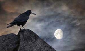 Bird are the messengers of omens. Source: Yuriy Mazur / Adobe Stock