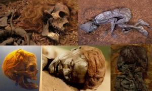 Bocksten Man. Photo source: (CC BY 2.0 ) The Tollund Man as he appears today. (Tollundman.dk) Osterby Man with hair tied in a Suebian Knot. At Archäologisches Landesmuseum. (CC BY 3.0) The face of the bog body known as Grauballe man. (Public Domain) The Upper body of the Elling Woman. (CC BY SA 3.0)