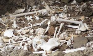 The bones of 72 Guanche people were found in a hard to reach cave-tomb in the Canary Islands