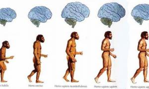 Brain size shrinking