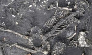 Child skeleton from 1,500-year-old crime mystery in Sweden