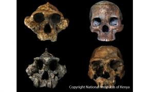 Diet responsible for human evolution
