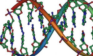 Scientists Discover Evolutionary Leap