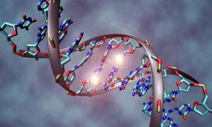 A DNA molecule that is methylated on both strands on the center cytosine. DNA methylation plays an important role for epigenetic gene regulation in development and cancer