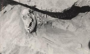 Dog burial in Siberia. Stone and bone implements are present near and under the cranium, and a round pebble is visible within the mouth.