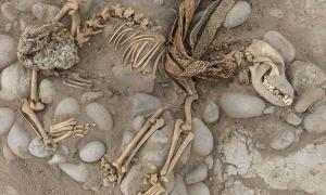 One of the dogs that was found buried with a human in what is now the Lima zoo. The zoo has underneath it layers of previous civilizations, as does much of Lima.