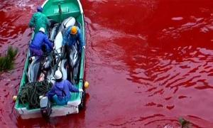 Dolphin Masacre in Japan