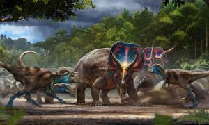 A museum artist's version of the dueling dinosaurs, which is being used as the promotional image for the North Carolina museum exhibit.                   Source: Matt Zeher / North Carolina Museum of Natural Sciences