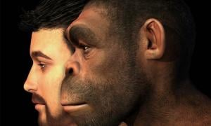 Early human interbreeding is well known but a recent research study has shown that modern humans both received and gave DNA to Neanderthals, proving that these hominin cousins met more than once in the long arc of prehistoric time.
