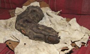 The Relic of Bir Hooker - Finger