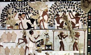 Egypt Wine Guards