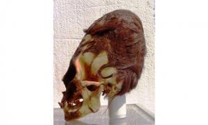 Elongated Skull in Paracas
