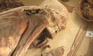 Turin Mummy, known as 'Fred', Egypt Museum of Turin.