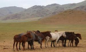 Horses congregate near a deer stone site in Bayankhongor, in central Mongolia's Khangai mountains.