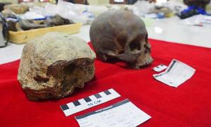 Homo erectus Skull Discovered in Central Java Provides More Evidence for Ancient Hominids in the Area