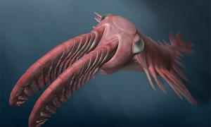 The 500-Million-Year-Old Evolutionary Arms Race Towards Better Vision