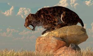 A saber-toothed cat stands atop a boulder on a grassy plain. Credit: Daniel / Adobe Stock