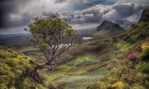 Flying Rowan Tree, Isle of Skye, Scotland