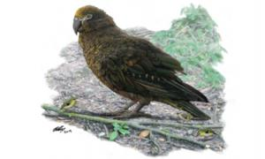 3 Foot Tall Parrot Species Discovered On New Zealand, Island Of Feathered Giants